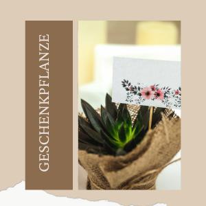 Geschenkpflanze